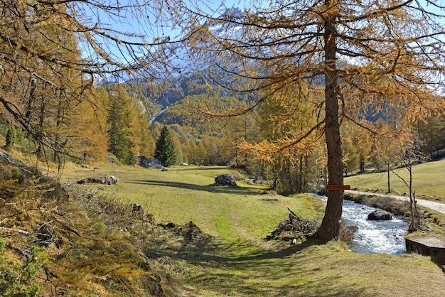 Bellissimo paesaggio in autunno nel parco naturale alpino con larici gialli e fiume