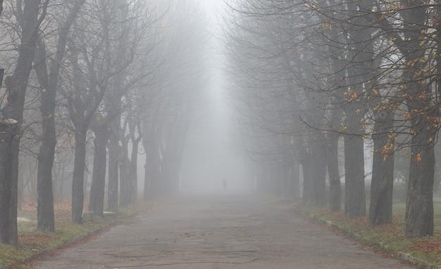 Bellissimo paesaggio di autunno nebbioso parco e foglie gialle