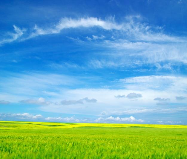 Bellissimo paesaggio di campo e cielo
