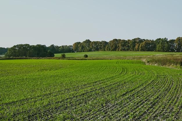 Bellissimo paesaggio verde campo arabile