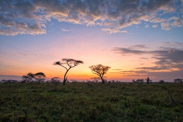Bellissimo paesaggio nella savana