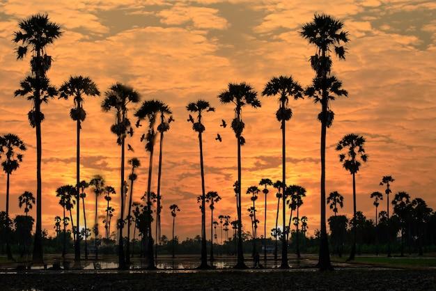 Bellissimo paesaggio silhouette di sugar palm tree su orange sky at twilight time riflessione sul