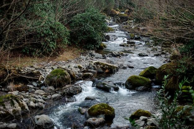 Bellissimo paesaggio del fiume di montagna selvaggio nella foresta sulle rocce a batumi, adjara, georgia