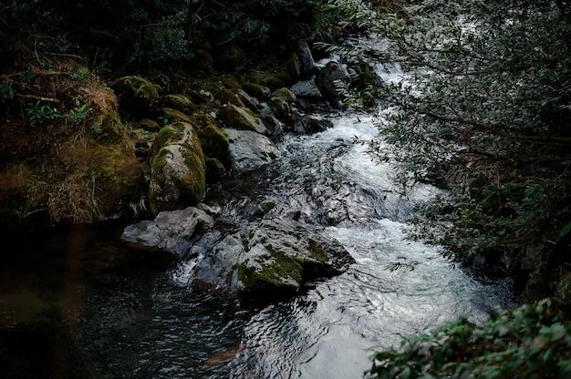 Bellissimo paesaggio del fiume di montagna selvaggio nella foresta sulle rocce con muschio a batumi, adjara, georgia