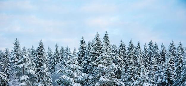 Bellissimo paesaggio della foresta invernale.