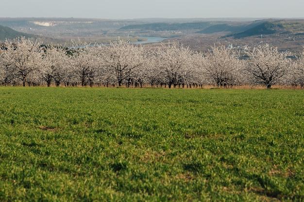 Bellissimo paesaggio con giardino fiorito, campo verde, fiume e colline in primavera. ampia carta da parati orizzontale.