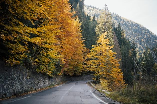 Bellissimo paesaggio con strada vuota, autunno dorato tra gli alberi di montagna con foglie verdi, gialle e arancioni.