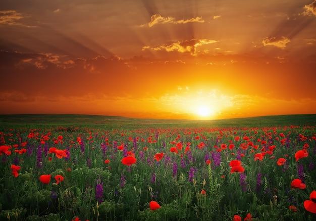 Bellissimo paesaggio con bel tramonto sul campo di papaveri. composizione della natura