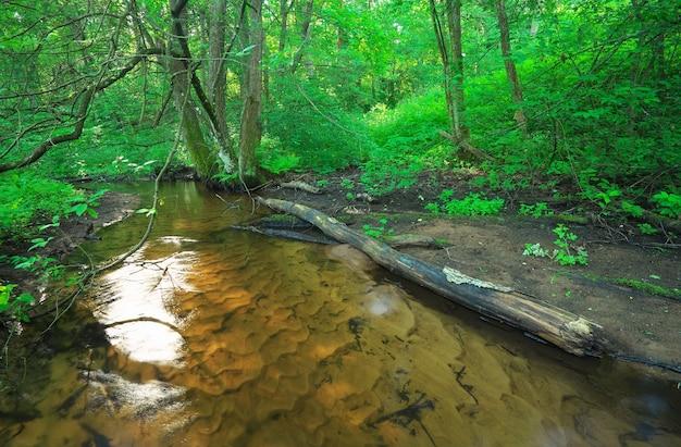 Bellissimo paesaggio con un fiume nella foresta. rami caduti di alberi nel fiume.