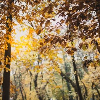 Bellissimo paesaggio con foglie di quercia gialla da vicino
