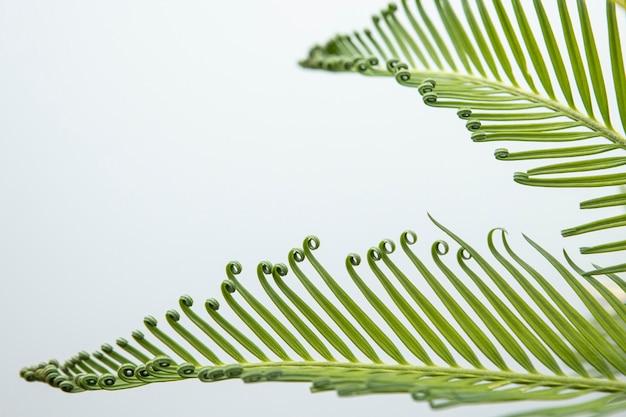 Belle piante a foglia con riccioli