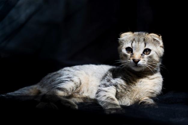 Bellissimo piccolo gatto al sole su uno sfondo scuro.