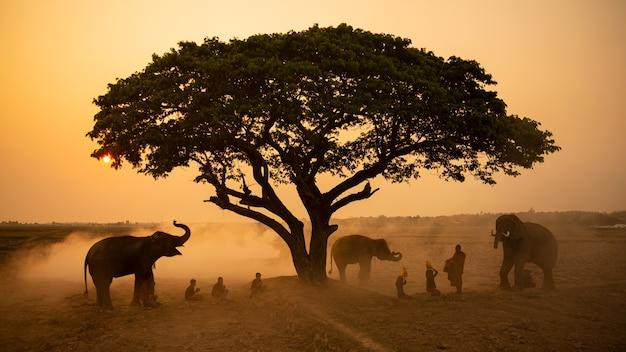 Bellissimo albero solitario nel mezzo del dessert con gli elefanti