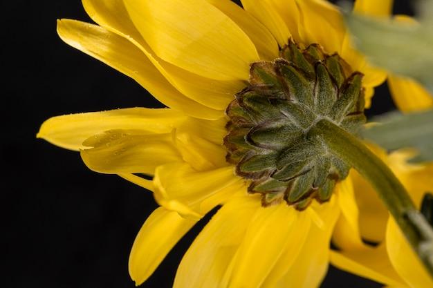 Bellissimo fiore giallo macro