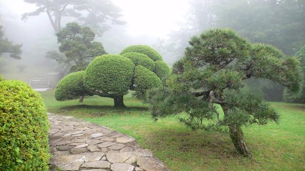 Bellissimo parco giapponese nebbioso nel periodo estivo