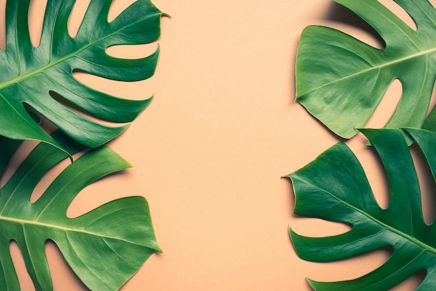 Bella monstera foglie foglia su sfondo colorato design