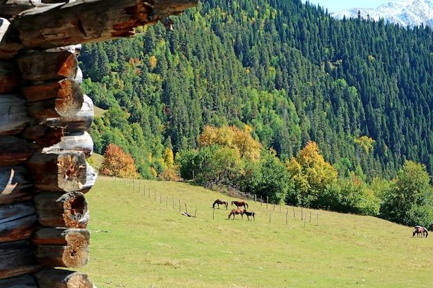 Bella fattoria di montagna con un gruppo di cavalli al pascolo nel prato, mestia, regione di svaneti, georgia