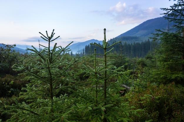 Bellissimo paesaggio di montagna. sfondo di foreste di pini nella nebbia mattutina