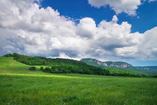 Bellissimo paesaggio di montagna con camomille e cielo nuvoloso.
