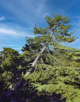 Bellissimo paesaggio di montagna con albero a cipro in una soleggiata giornata estiva