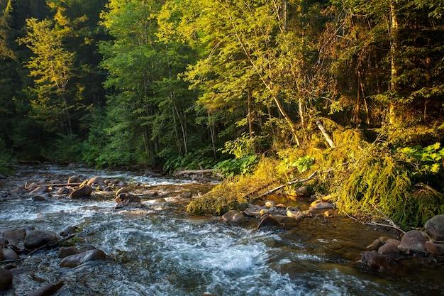 Bellissimo fiume di montagna in autunno foresta natura paesaggio viaggio sfondo vacanza escursionismo sport