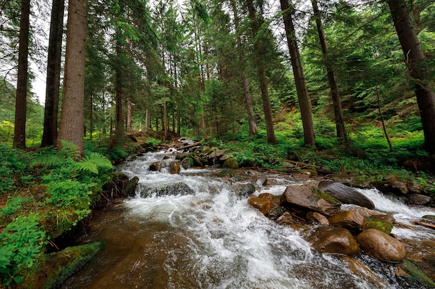 Bella cascata di montagna con alberi sullo sfondo
