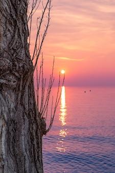 Bellissimo tramonto multicolore sul lago di garda con un albero in primo piano