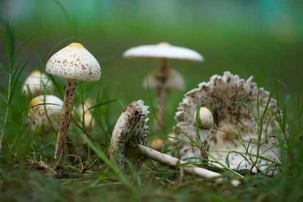 Bella immagine di funghi nel parco