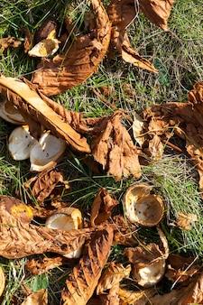 Bellissimo fogliame naturale di castagno che ha cambiato colore nella stagione autunnale, primo piano dei castagni