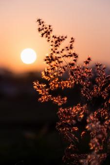 Bellissimo paesaggio naturale luminoso colorato il fiore di campo rosso di erba tropicale sotto il sole e la luce del sole nel prato durante il tramonto, arancia calda per lo sfondo della natura estiva