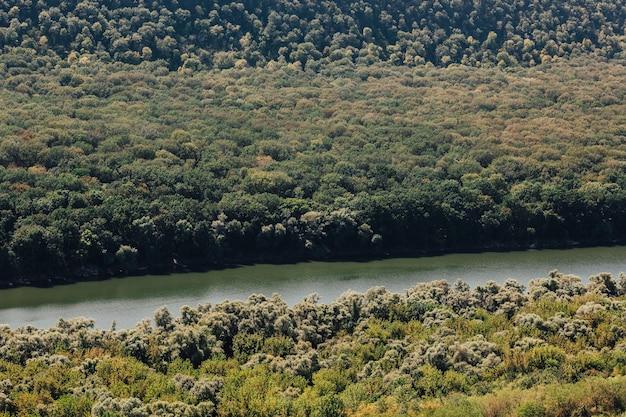 Bellissimo scenario naturale del fiume nella foresta verde con le montagne sullo sfondo