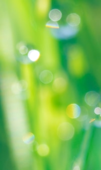 Bellissimo sfondo sfocato gialloverde naturale con bokeh arcobaleno rotondo