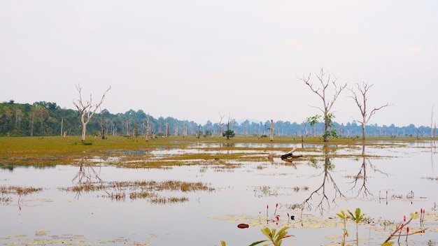 Splendida vista del paesaggio della natura del lago stagno a neak poan nel complesso di angkor wat, siem reap cambogia.