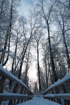 Bellissima natura del nord, paesaggio naturale con grandi alberi nel gelido inverno