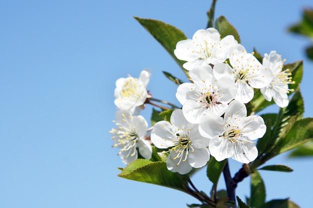 Bella scena della natura con albero di fiori in fiore.