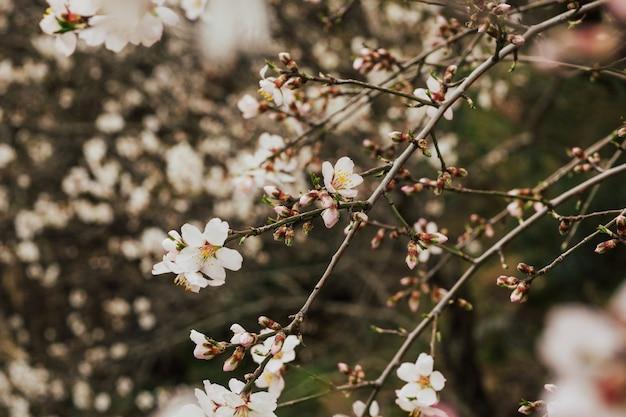 Bella scena della natura con albero in fiore.