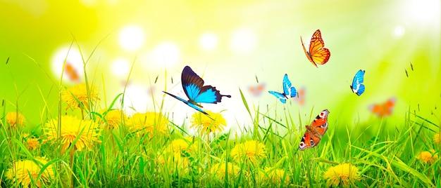 Bella vista della natura della farfalla su sfondo sfocato in giardino.
