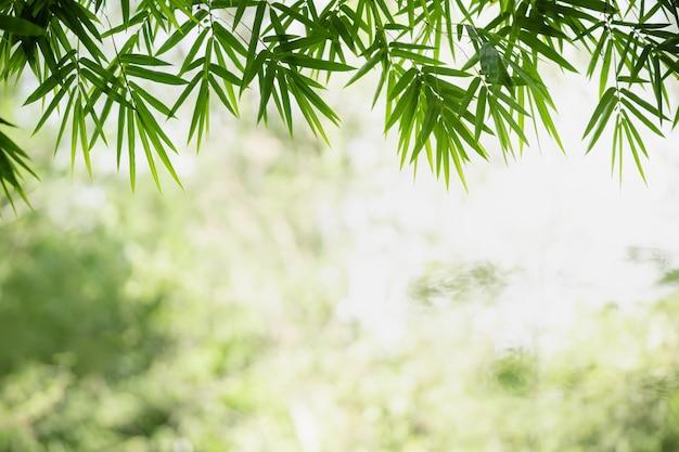 Bella natura vista foglia di bambù verde su sfondo verde sfocato sotto la luce del sole con bokeh