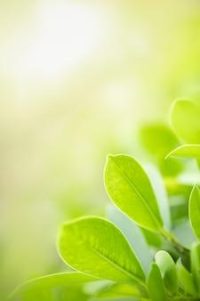 Foglia verde di bella vista della natura sul fondo vago della pianta nell'ambito di luce solare con lo spazio della copia e del bokeh.