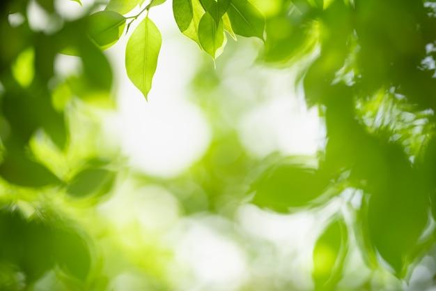 Bella foglia verde vista natura su sfondo verde sfocato sotto la luce del sole con bokeh