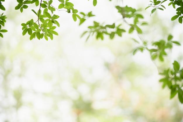 Bellissima vista della natura foglia verde su sfondo verde sfocato sotto la luce del sole