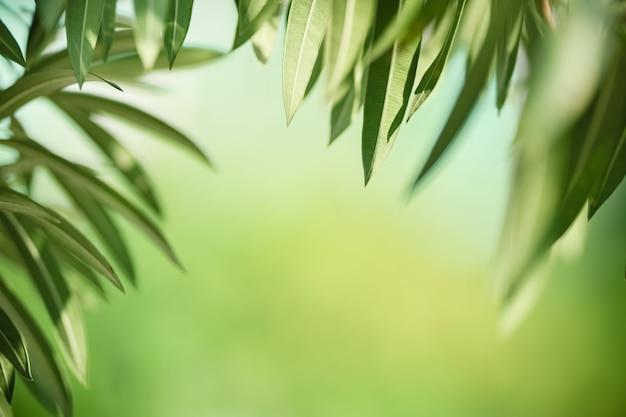 Bella natura vista foglia verde su sfondo sfocato verde