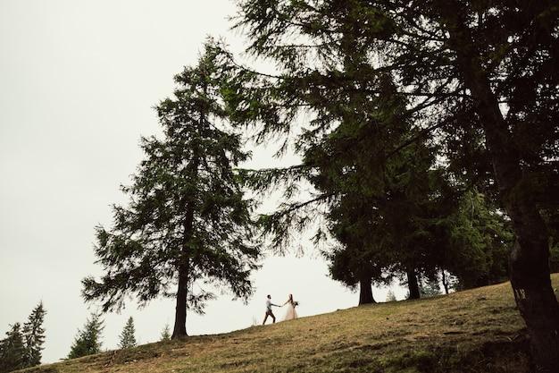 Bellissimi sposi stanno camminando su una collina in mezzo alla pineta e alla montagna.