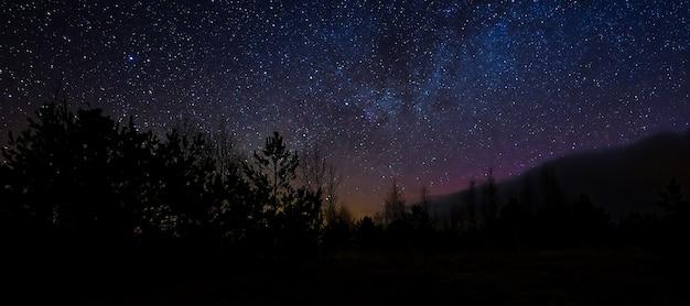 Il bel cielo notturno colora il cielo notturno colorato e la scena notturna degli alberi nella palude sotto il cielo delle stelle