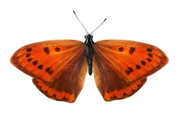 Bella farfalla arancione isolata su priorità bassa bianca