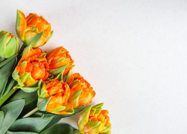 Bellissimi tulipani arancioni su sfondo bianco perfetti per biglietti di auguri di sfondo