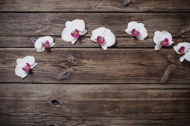 Belle orchidee su fondo in legno vecchio