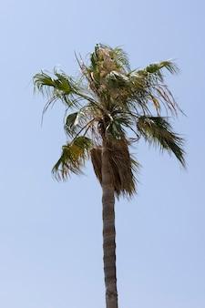 Bella palma e sfondo azzurro del cielo