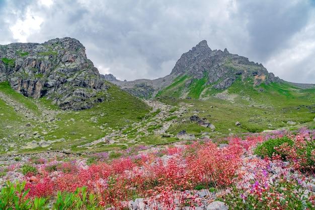 Bellissimo panorama di alte montagne rocciose e prati verdi