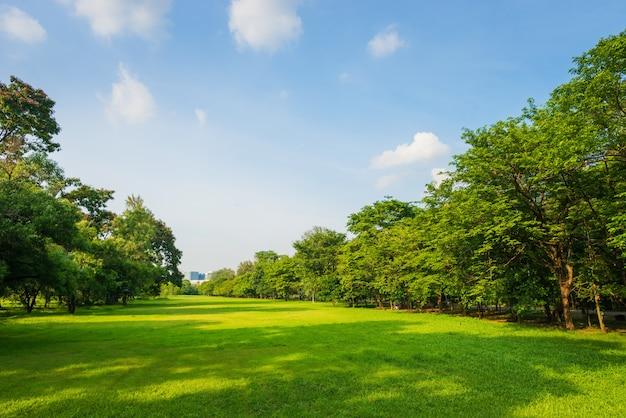 Bella scena del parco in parco pubblico con campo di erba verde